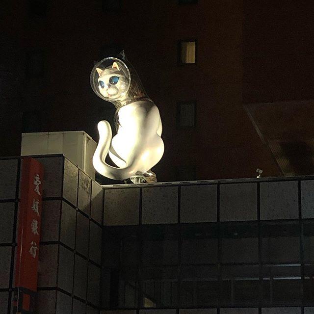 高松に怪しいオブジェが?こういうのはやってるのかな?#ネコ#巨大猫#オブジェ#高松